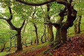 eiken bomen Kellerwald-Edersee