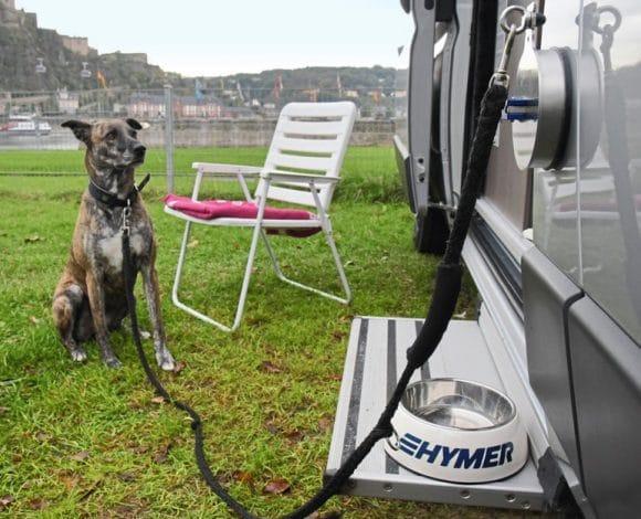 hond camper buiten