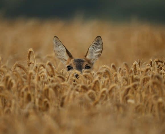 ACSI & Natuur; wildspotten in Europa