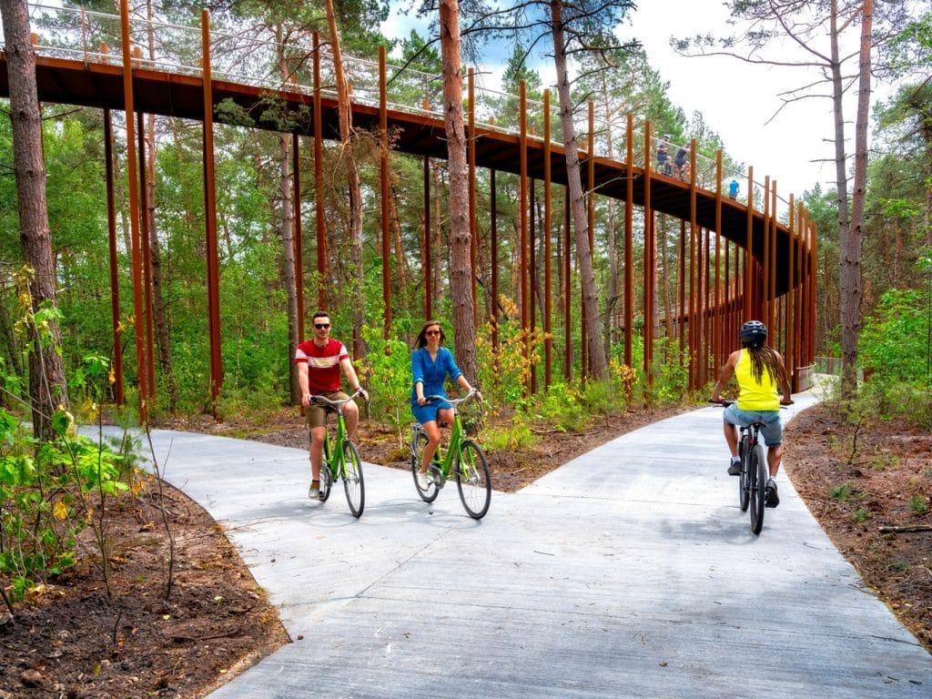 fietsroute_Fietsen door de Bomen