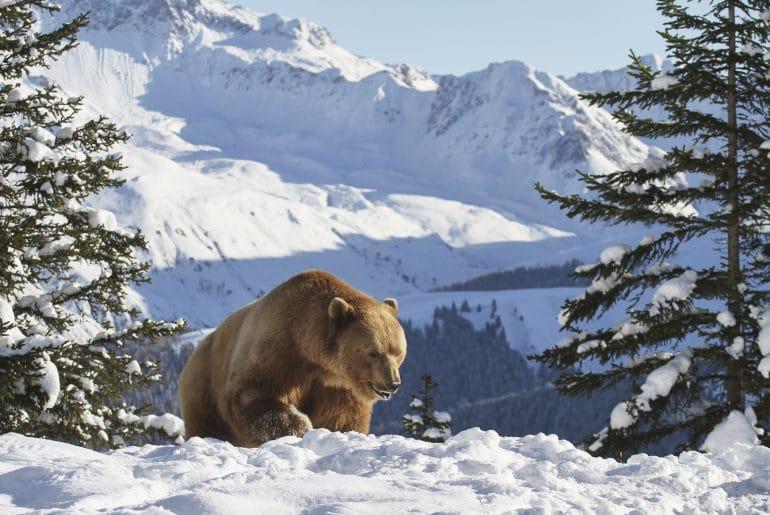 Graubünden sneeuw wintersport