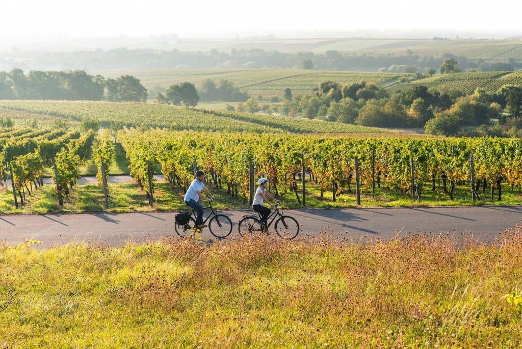 Duitse vakantieroutes_Duitse Wijnroute