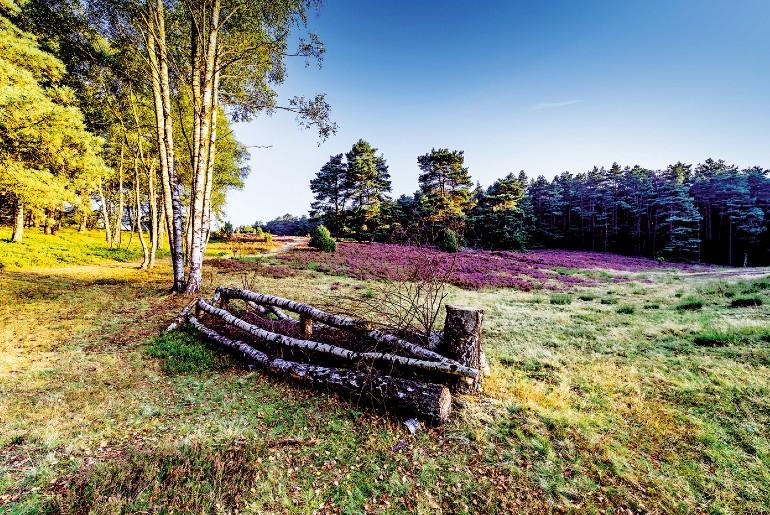 De Lüneburger Heide heeft unieke landschappen om van te genieten.